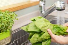 Lavagem da mulher os vegetais imagens de stock royalty free