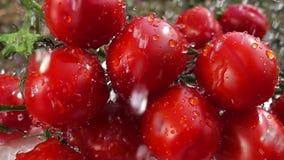 Lavagem de tomates de cereja com água video estoque
