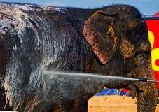 Lavagem do elefante Imagens de Stock Royalty Free