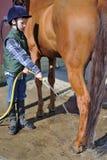 Lavagem do menino seu cavalo Fotografia de Stock