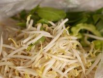 Lavagem fresca branca da combinação dos brotos com lado do vegetal da água Fotografia de Stock Royalty Free