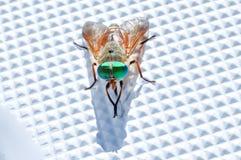 Lavages Varicolored de mouche sur la surface d'embarcation plastique Photographie stock