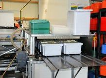 Lavaggio automatico dell'asparago Fotografia Stock
