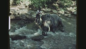 Lavaggio dell'elefante stock footage