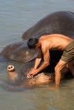 Lavaggio dell'elefante Fotografie Stock