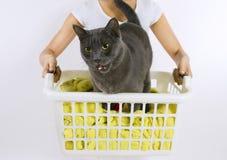 Lavaggio divertente del gatto Fotografie Stock Libere da Diritti