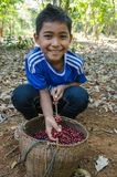 Lavan ethnic boy with coffee berries Royalty Free Stock Image