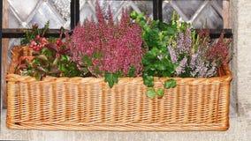 Lavanda, arándano e hierbas frescas en una cesta de mimbre en un viento Foto de archivo libre de regalías