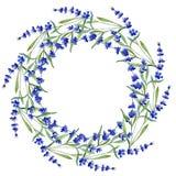 Lavanda blu Fiore botanico floreale Struttura selvaggia del wildflower della foglia della molla in uno stile dell'acquerello Fotografie Stock
