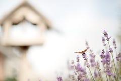 Lavanda e la farfalla e la scatola di uccello Fotografie Stock