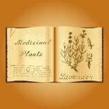 Lavanda Ejemplo botánico Plantas médicas Libro abierto de Old del herborista del libro Foto de archivo libre de regalías