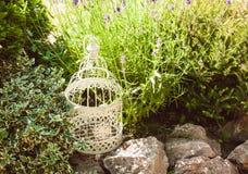 Lavanda en jardín de rocalla imagen de archivo libre de regalías