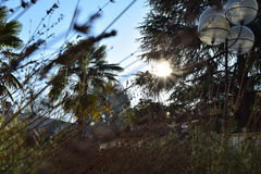 Lavanda en salida del sol imagen de archivo libre de regalías