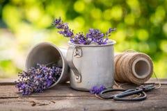 Lavanda fresca e fragrante in un giardino di estate fotografia stock