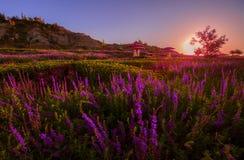 Lavanda plantada en el pie de la montaña China de Tianshan
