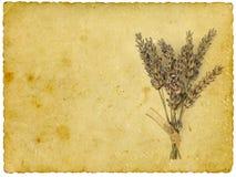 Lavanda seca Fotografía de archivo libre de regalías
