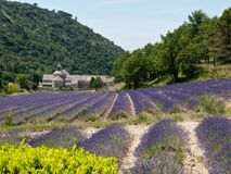 Lavande à l'abbaye de Senanque, Provence France Photo stock