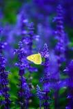 Lavande et papillon Images libres de droits