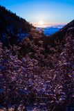 Lavande placé sur une montagne au lever de soleil photos libres de droits