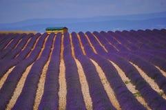 Provence Lavender postcard Stock Images