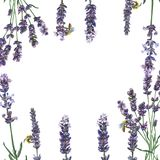Lavande pourpre Fleur botanique florale Place d'ornement de frontière de vue photographie stock libre de droits