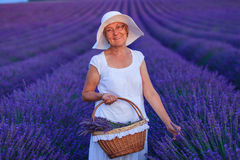 lavander领域的资深妇女 库存图片