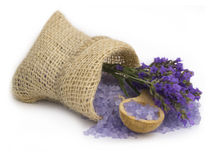 Lavander arrangement Stock Image