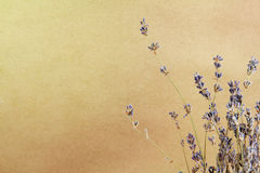 Lavander background on a brown paper Royalty Free Stock Image