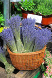 Lavander basket Stock Photography
