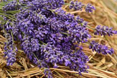 Lavander bouquet. Is lying on the hay Stock Image