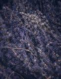 Lavander bouquet. Mystic Dried purple - blue lavander bouquet Stock Images
