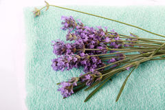 Lavander branch Royalty Free Stock Image