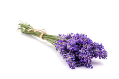 Lavander. Bunch of lavander isolated on white background Royalty Free Stock Images