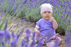Lavander child. Infant baby girl in violet lavander meadow Stock Photography
