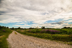 Lavander on a country road in the fields of italy Royalty Free Stock Photography