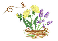 Lavander and dandelion. Illustration lavander and dandelion and bee Royalty Free Stock Photography