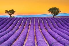 Lavander de Valensole en Provence, France photographie stock libre de droits