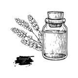 Lavander essential oil bottle and bunch of flowers hand drawn vector illustration. Isolated drawing for Aromatherapy. Treatment, alternative medicine, beauty Stock Images