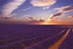 Lavander fält med att förbluffa solnedgång royaltyfria bilder