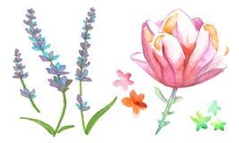 Lavander för lös blomma för vattenfärg royaltyfri illustrationer