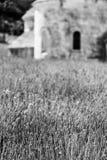 Lavander field Royalty Free Stock Images
