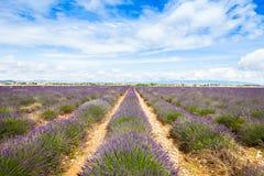 Lavander field Royalty Free Stock Photo