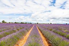 Lavander field Stock Photo
