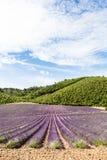 Lavander field Royalty Free Stock Image