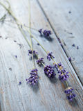 Lavander flower Royalty Free Stock Photography
