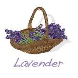 Lavander flower vector. Stock Photos