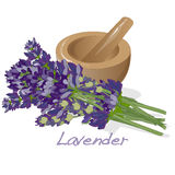 Lavander flower vector. Royalty Free Stock Images