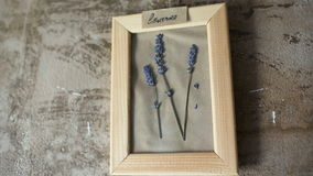 Lavander flowers in picture frame on wall. Interior stock video footage