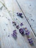 Lavander kwiat Fotografia Royalty Free