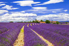 Lavander in Provance, France Royalty Free Stock Images